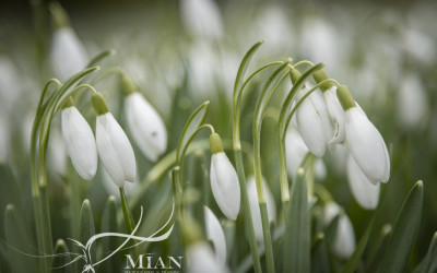 Garden Photography Cavan Monaghan Meath Louth