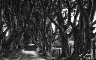 Dark Hedges County Antrim Northern Ireland Black & White