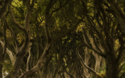 Dark Hedges in Autumn County Antrim