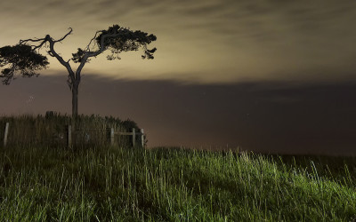 Fairy Tree Knockbridge County Louth at Night Ireland