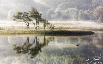 Lake Duck Trees Reflection Mist Wales Snowdonia